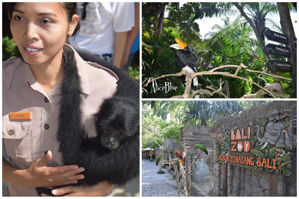 Bali Zoo Alice Blue