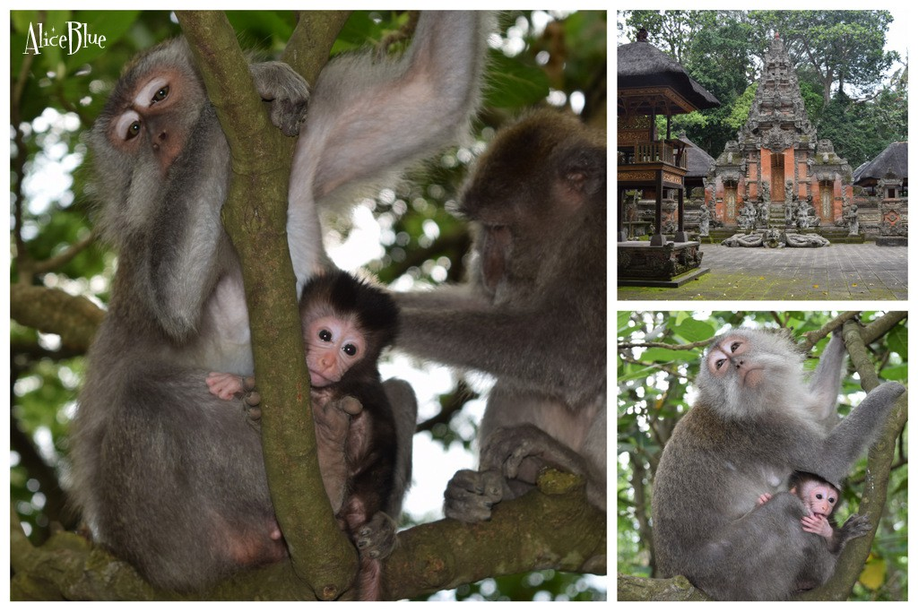 Bali Monkey Forest Alice Blue