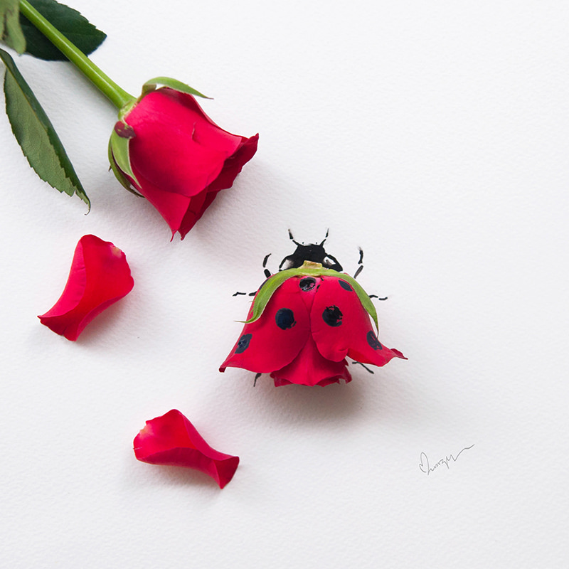 ladybird_made_from_a_rose_by_limzy