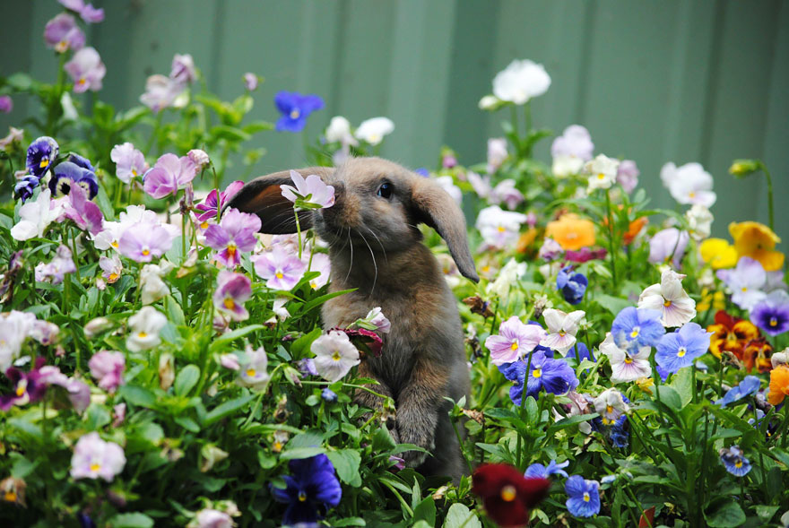 animals-smelling-flowers-27__880