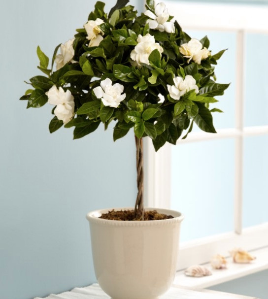 these-are-the-plants-to-keep-in-your-bedroom-for-a-good-night-s-sleep-plants-for-bedroom-58e3a78db5abf274879582ad-w620_h800