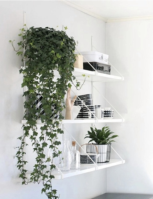 these-are-the-plants-to-keep-in-your-bedroom-for-a-good-night-s-sleep-plants-for-bedroom-58e3a885dcbc5e748a046e06-w620_h800