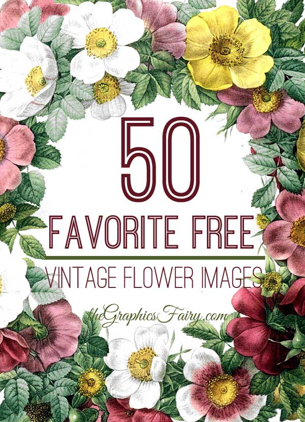 50-free-flower-images-graph-2